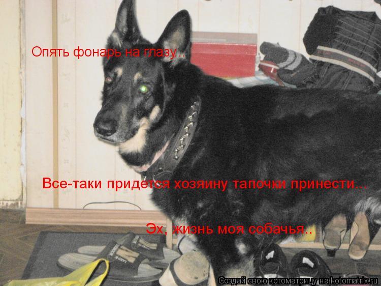 Котоматрица: Опять фонарь на глазу... Все-таки придется хозяину тапочки принести... Эх, жизнь моя собачья.. Все-таки придется хозяину тапочки принести...