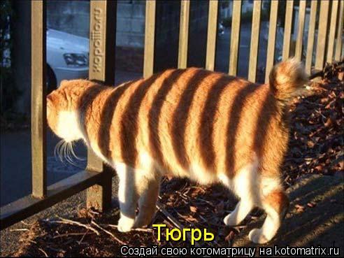 Котоматрица: Тюгрь