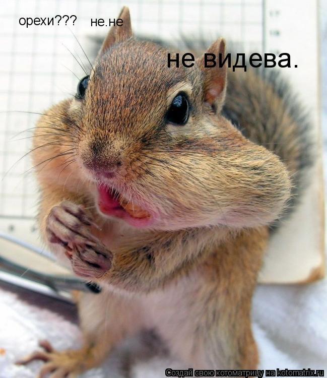 Котоматрица: орехи??? не.не  не видева.