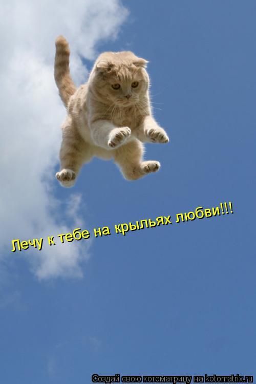 Котоматрица: Лечу к тебе на крыльях любви!!!