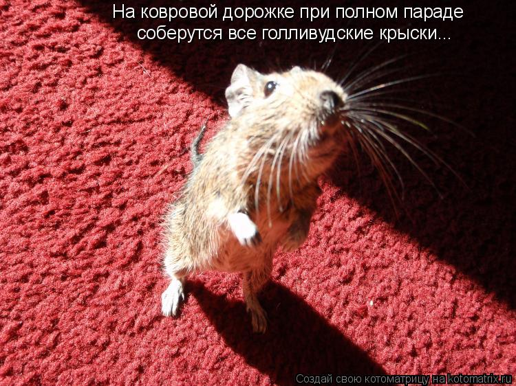 Котоматрица: На ковровой дорожке при полном параде соберутся все голливудские крыски...