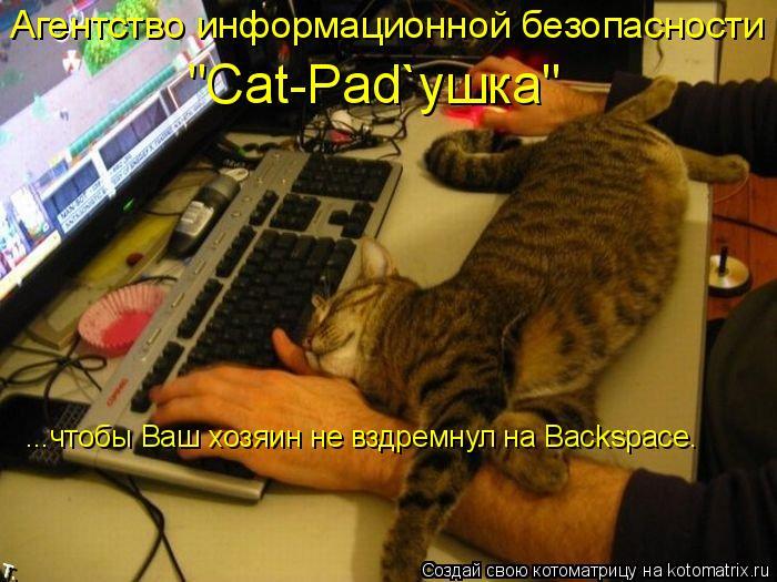 """Котоматрица: ...чтобы Ваш хозяин не вздремнул на Backspace. Агентство информационной безопасности """"Cat-Pad`ушка"""""""