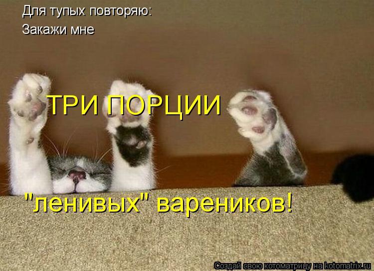 """Котоматрица: Для тупых повторяю: Закажи мне  ТРИ ПОРЦИИ """"ленивых"""" вареников!"""