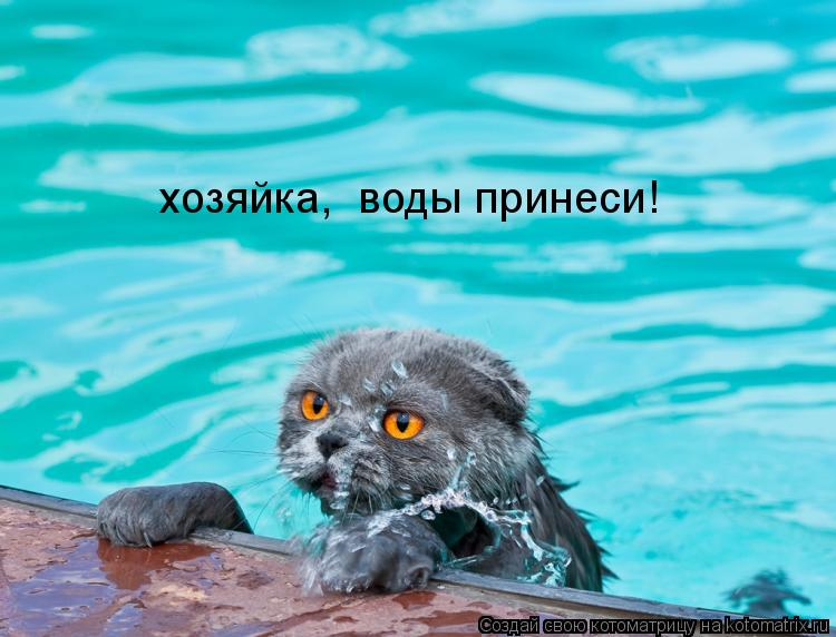 Котоматрица: хозяйка,  воды принеси!