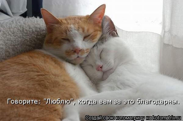 """Котоматрица: Говорите: """"Люблю"""", когда вам за это благодарны."""