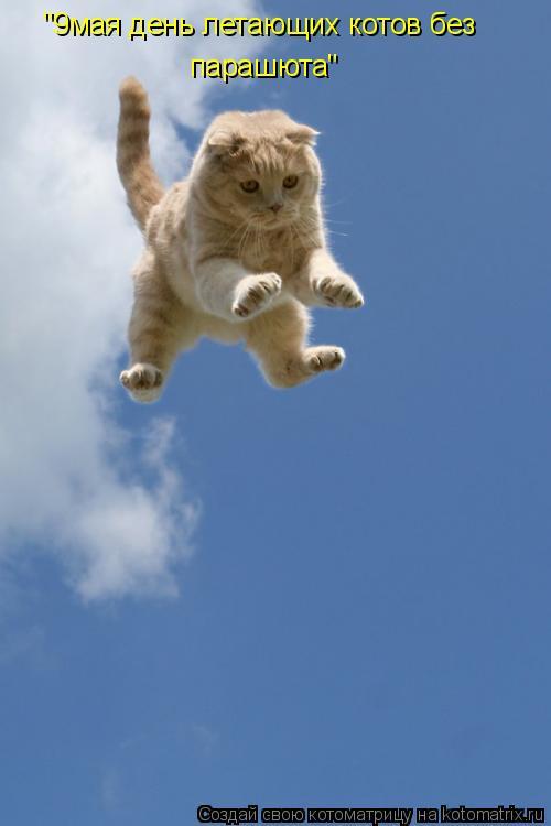 """Котоматрица: """"9мая день летающих котов без  парашюта"""""""