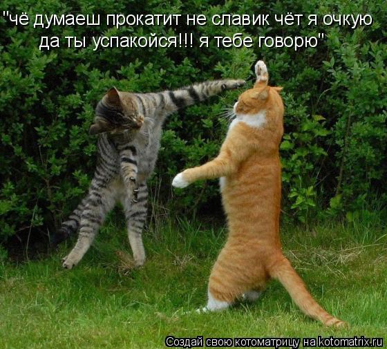 """Котоматрица: """"чё думаеш прокатит не славик чёт я очкую  да ты успакойся!!! я тебе говорю"""""""