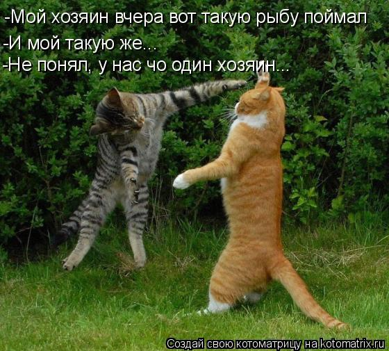 Котоматрица: -И мой такую же... -Мой хозяин вчера вот такую рыбу поймал -Не понял, у нас чо один хозяин...