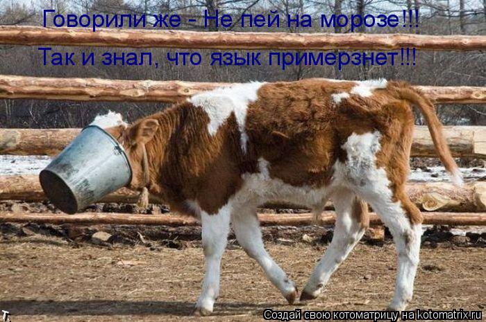 Котоматрица: Говорили же - Не пей на морозе!!! Так и знал, что язык примерзнет!!!