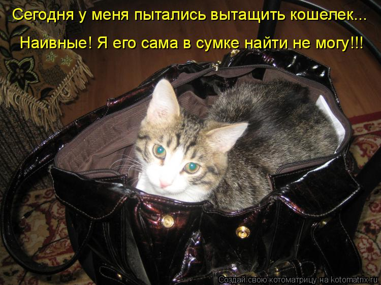 Котоматрица: Сегодня у меня пытались вытащить кошелек... Наивные! Я его сама в сумке найти не могу!!!
