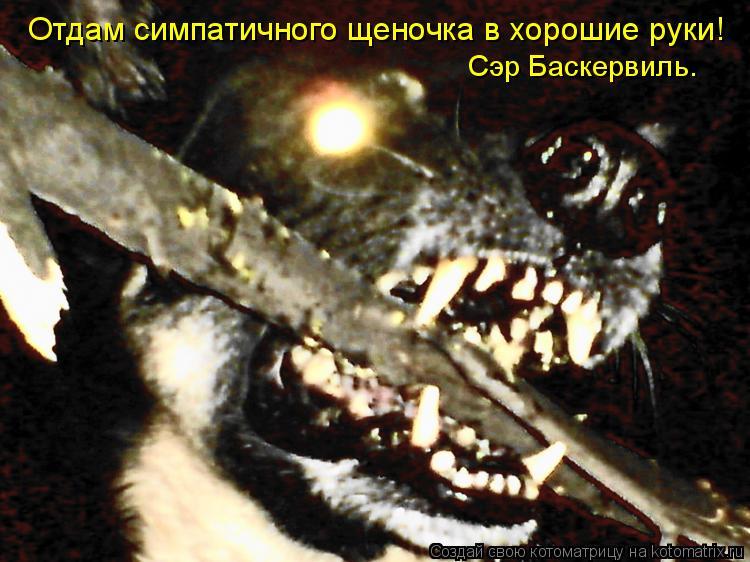 Котоматрица: Отдам симпатичного щеночка в хорошие руки! Сэр Баскервиль.