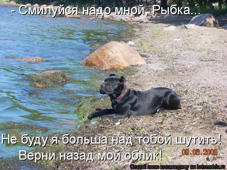 Котоматрица: - Смилуйся надо мной, Рыбка... Не буду я больша над тобой шутить! Верни назад мой облик!
