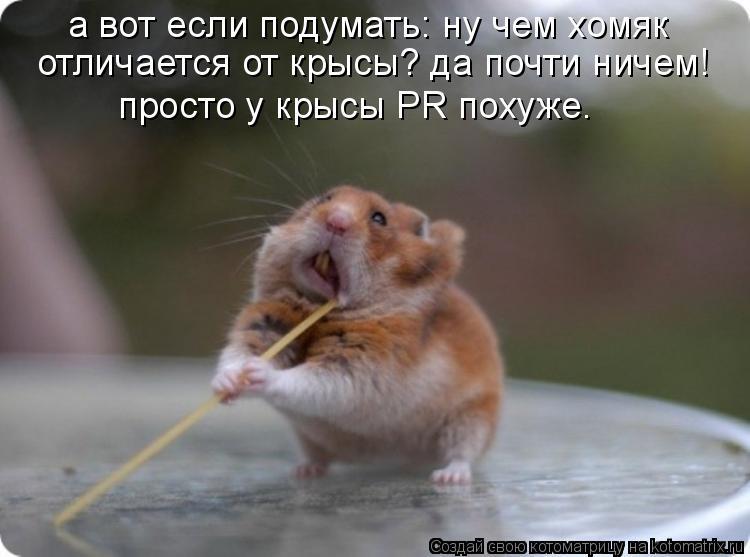 Котоматрица: а вот если подумать: ну чем хомяк  отличается от крысы? да почти ничем!  просто у крысы PR похуже.