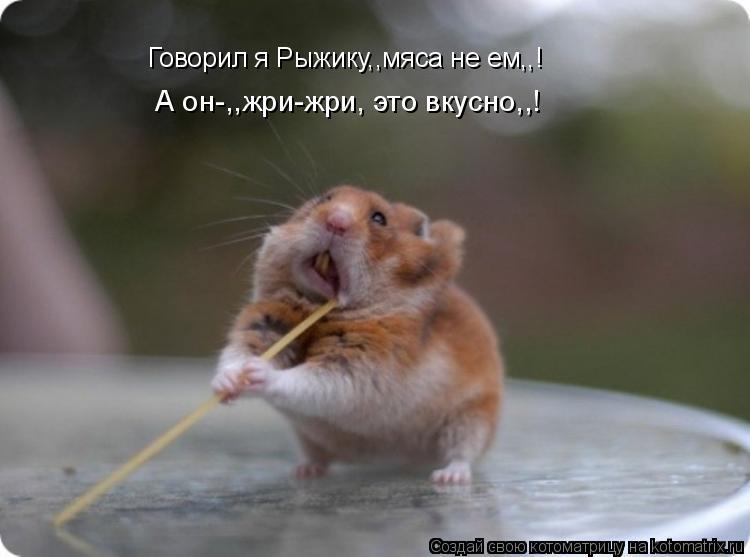 Котоматрица: Говорил я Рыжику,,мяса не ем,,! А он-,,жри-жри, это вкусно,,!
