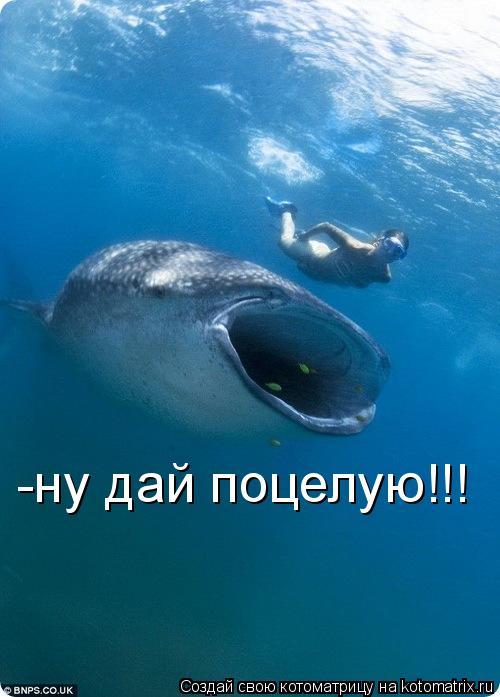 Котоматрица: -ну дай поцелую!!!