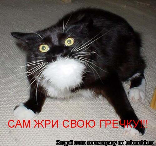 Котоматрица: САМ ЖРИ СВОЮ ГРЕЧКУ!!!