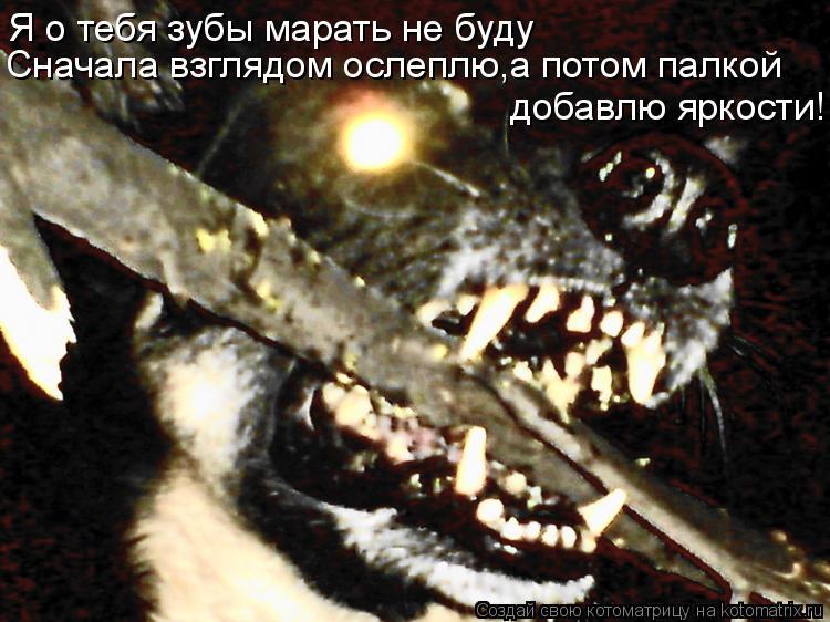 Котоматрица: Я о тебя зубы марать не буду Сначала взглядом ослеплю,а потом палкой добавлю яркости!