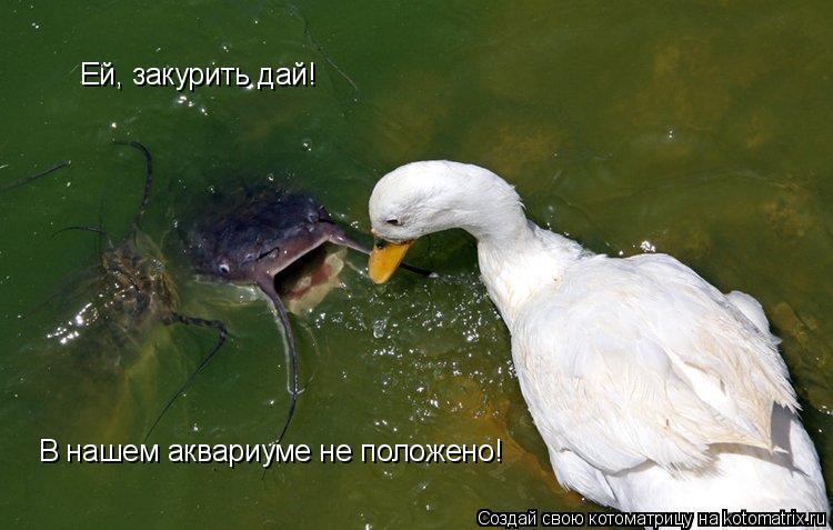 Котоматрица: Ей, закурить дай! В нашем аквариуме не положено!