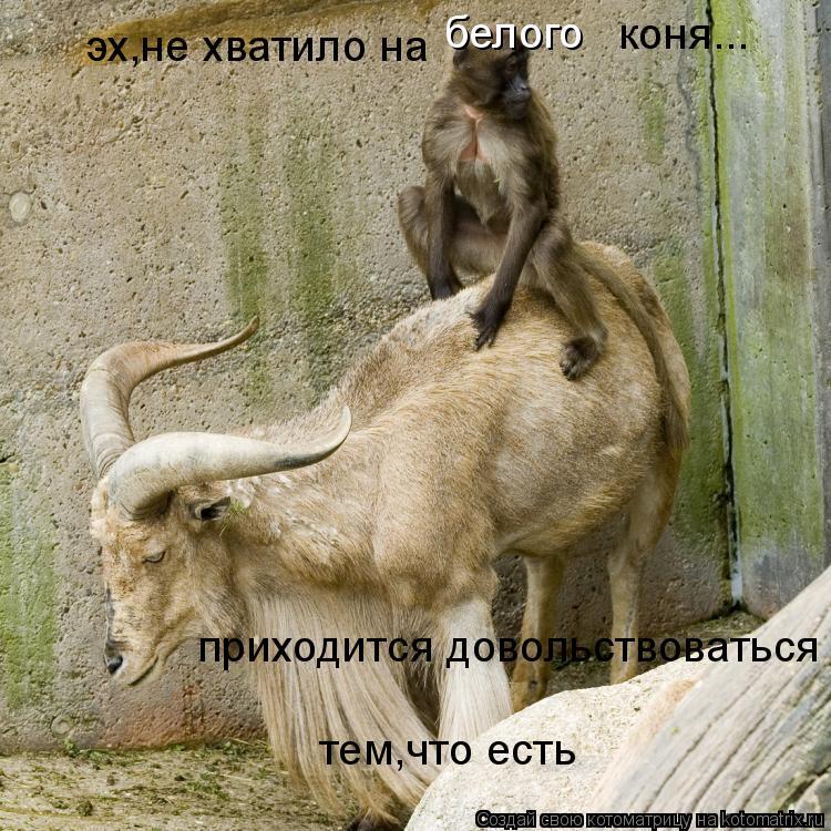 Котоматрица: эх,не хватило на белого  коня... приходится довольствоваться  тем,что есть