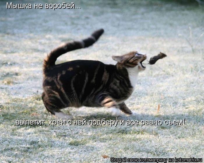Котоматрица: Мышка не воробей...  вылетит, хрен с ней подберу и все равно съем!
