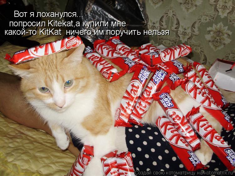Котоматрица: Вот я лоханулся...  попросил Kitekat,а купили мне какой-то KitKat  ничего им поручить нельзя