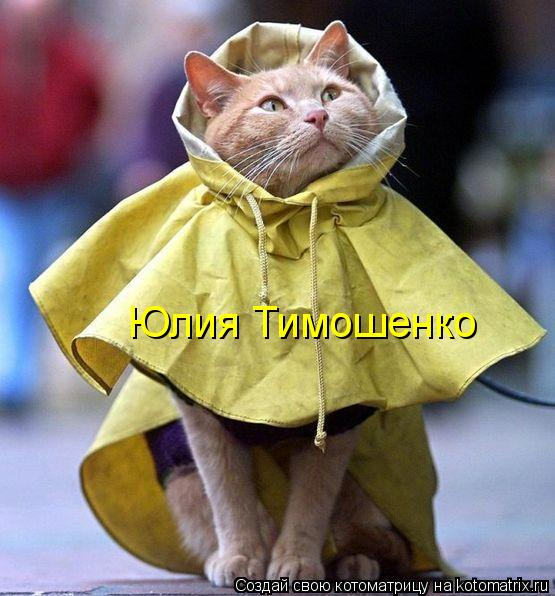 Котоматрица: Юлия Тимошенко