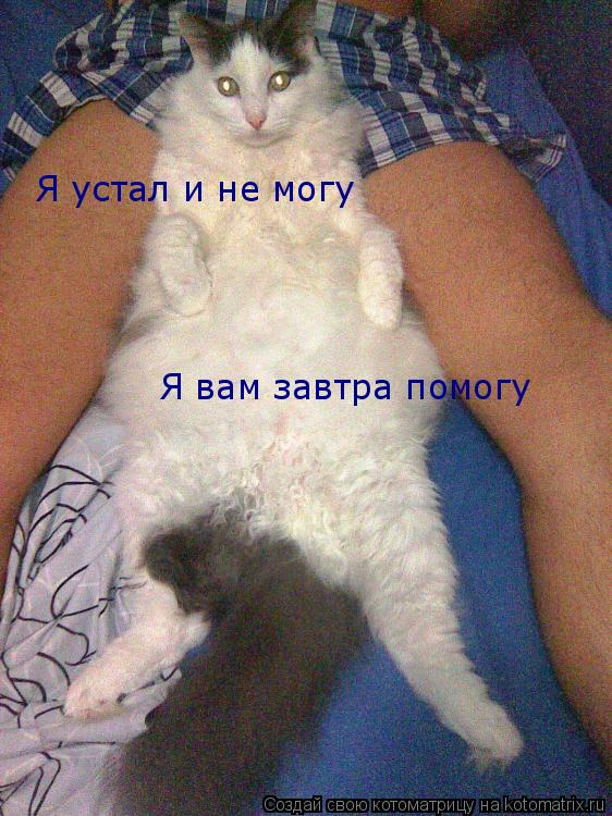 Котоматрица: Я устал и не могу Я вам завтра помогу
