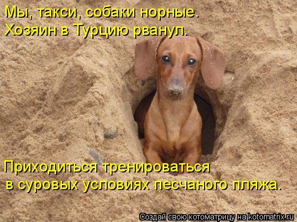 Котоматрица: Мы, такси, собаки норные. Хозяин в Турцию рванул. Приходиться тренироваться в суровых условиях песчаного пляжа.