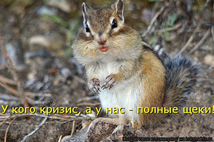 Котоматрица: У кого кризис, а у нас - полные щеки!