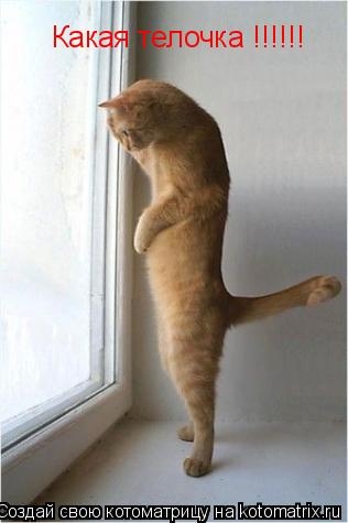 Котоматрица: Какая телочка !!!!!!
