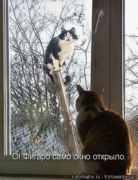 Котоматрица: О! Фигаро само окно открыло.