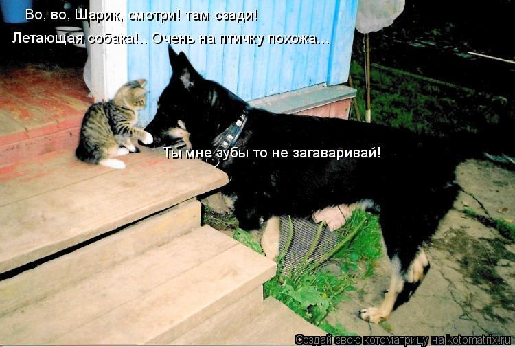 Котоматрица: Во, во, Шарик, смотри! там сзади!  Летающая собака!.. Очень на птичку похожа... Ты мне зубы то не загаваривай!