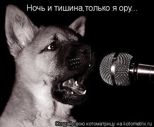 Котоматрица: Ночь и тишина,только я ору...