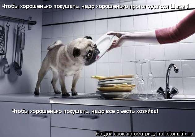 Котоматрица: Чтобы хорошенько покушать, надо хорошенько проголодаться Шарик! Чтобы хорошенько покушать, надо все съесть хозяйка!