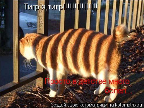 Котоматрица: Тигр я,тигр!!!!!!!!!!!!!!! Просто в детстве много  болел...