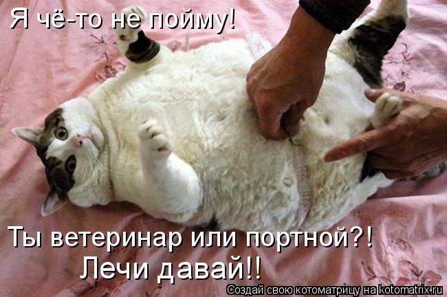 Котоматрица: Я чё-то не пойму! Ты ветеринар или портной?! Лечи давай!!