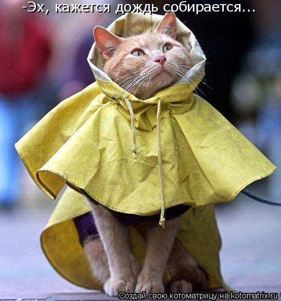 Котоматрица: -Эх, кажется дождь собирается...