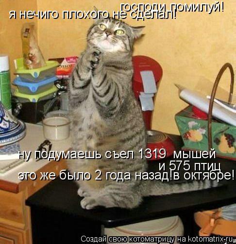 Котоматрица: господи,помилуй! я нечиго плохого не сделал! ну подумаешь съел 1319  мышей  и 575 птиц  это же было 2 года назад!в октябре!