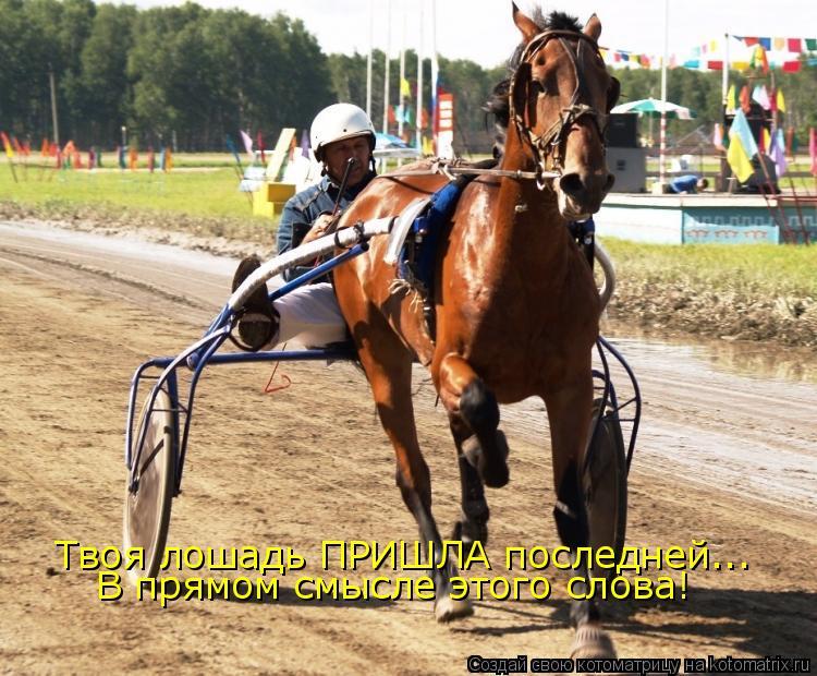 Котоматрица: Твоя лошадь ПРИШЛА последней... В прямом смысле этого слова!