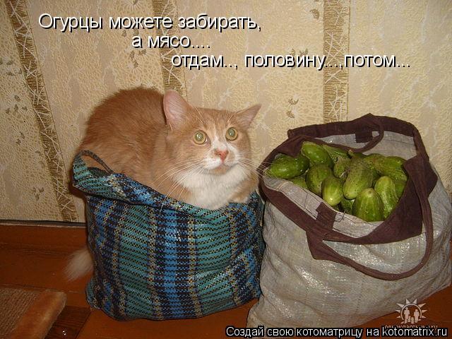 Котоматрица: Огурцы можете забирать, а мясо....  отдам.., половину...,потом...