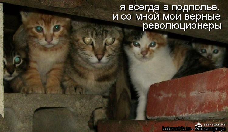 Котоматрица: я всегда в подполье. и со мной мои верные революционеры