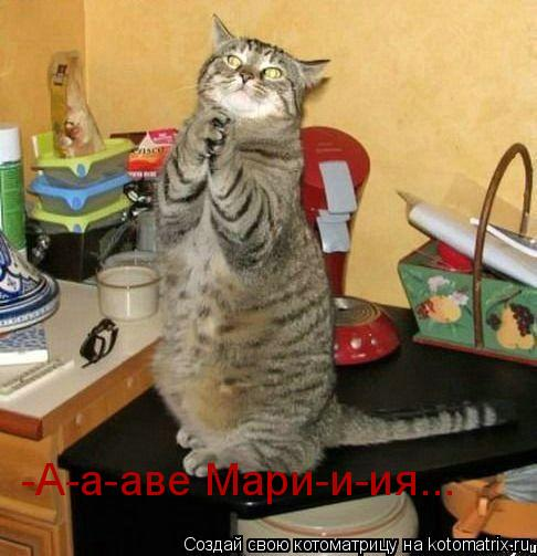 Котоматрица: -А-а-аве Мари-и-ия...