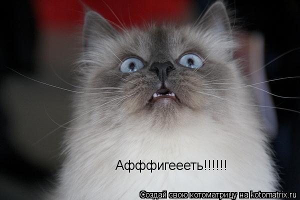 Котоматрица: Афффигеееть!!!!!!