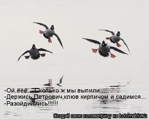 Котоматрица: -Ой,ёёё....Сколько ж мы выпили... -Держись,Петрович,клюв кирпичом и садимся... -Разойдиииись!!!!!