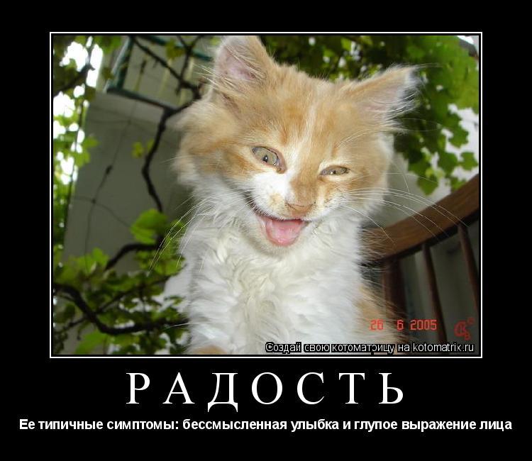 Котоматрица: Радость Ее типичные симптомы: бессмысленная улыбка и глупое выражение лица