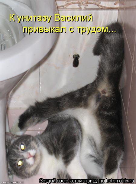 Котоматрица: К унитазу Василий  привыкал с трудом...