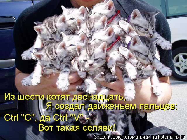 "Котоматрица: Из шести котят двенадцать,  Я создал движеньем пальцев: Ctrl ""C"", да Ctrl  Ctrl ""C"", да Ctrl ""V"" -  Вот такая селяви!"