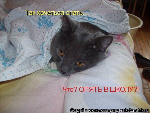 Котоматрица: Так хочеться спать... Что? ОПЯТЬ В ШКОЛУ?!