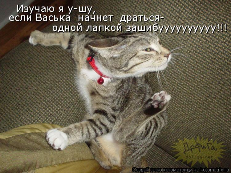 Котоматрица: Изучаю я у-шу, одной лапкой зашибуууууууууу!!! если Васька  начнет  драться-