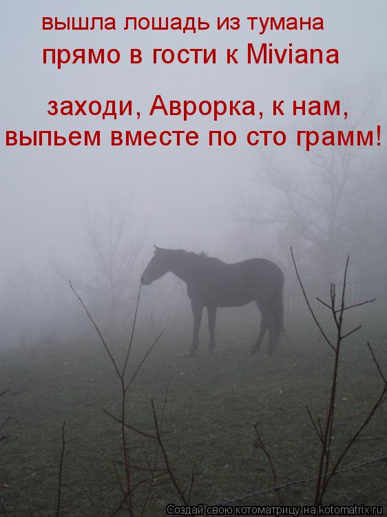 Котоматрица: вышла лошадь из тумана прямо в гости к Miviana заходи, Аврорка, к нам, выпьем вместе по сто грамм!